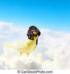 Parrot in pilot hat