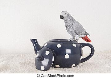 parrot in studio