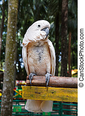 Parrot macaw - White macaw parrot, Nong Nooch Tropical ...