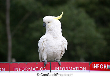 A photo of a parrot sitting on a billboard.