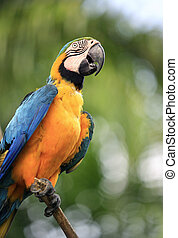 Parrot on a branch. Park of birds. Bali. Indonesia