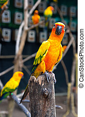 Parrot on a branch.