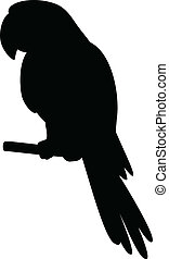 Parrot on a pole, silhouette - Clever speaking parrot sits...