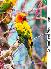 Parrot on a Tree Branch