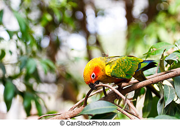 Parrot on the tree.