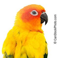 parrot on white