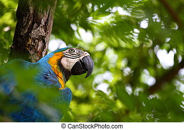 Parrot over natural background