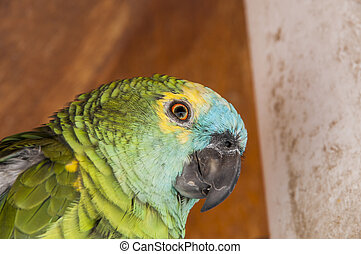 parrot quiet place in the innkeeper