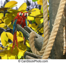 Parrot - red blue macaw against a background of bright leaves of trees