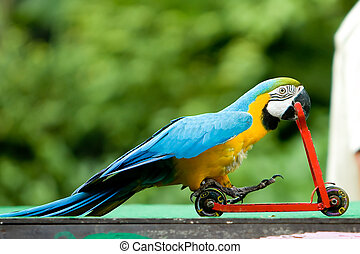 Parrot riding bicycle - Parrot riding on a bicycle.