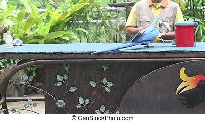 parrot show in bird park