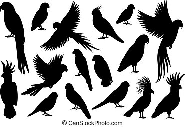 Parrot silhouettes on white background
