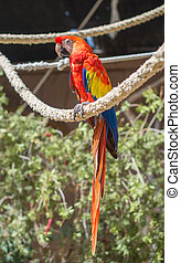 Parrot sitting on branch in national park.