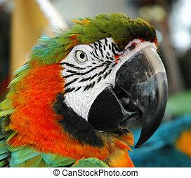 Parrot - Closeup - Parrot