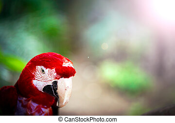 Parrot Wild Bird Tropical Animal