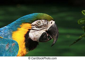 parrot.3