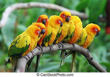 A row oflittle parrots.