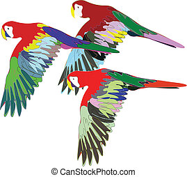 Parrots are flying on isolated background