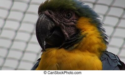 Parrots, Birds, Animals, Wildlife,