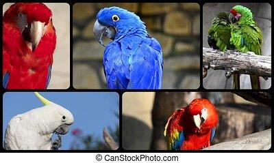 Parrots, collage