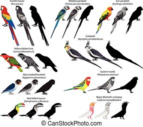 Parrots - Collection of different species of parrots. Colour...