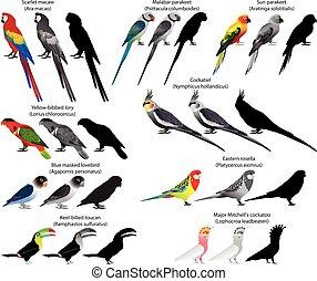 Parrots - Collection of different species of parrots. Colour...