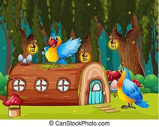 Parrots in jungle home scene