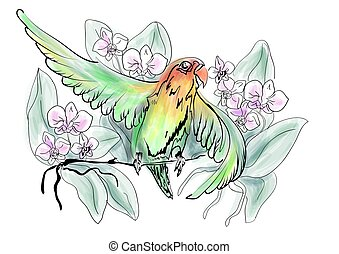 Parrots Lovebird and flowers on white background