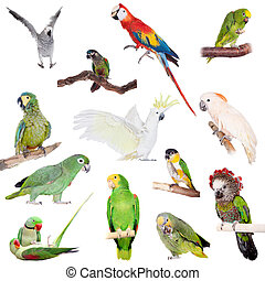 Parrots set on white