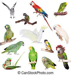 Parrots set on white