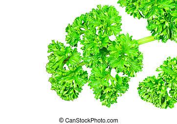 parsley., 葉, 湾