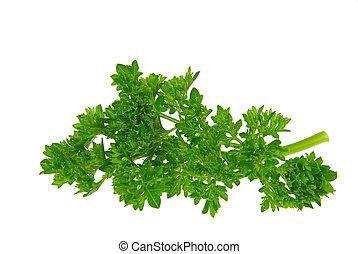 parsley 11
