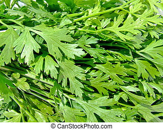 Parsley - A bunch of fresh green parsley leafs