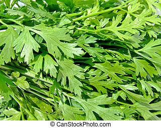 Parsley - A bunch of fresh green parsley leafs