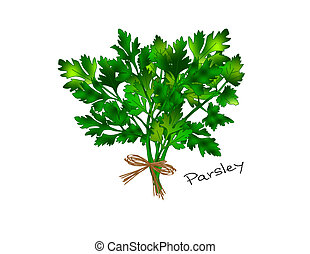 An illustration of a bunch of bright green parsley tied with a raffia bow.