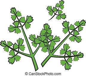 Parsley - cartoon parsley,isolated,vector illustration