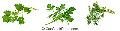 parsley, cilantro, dill on a white background