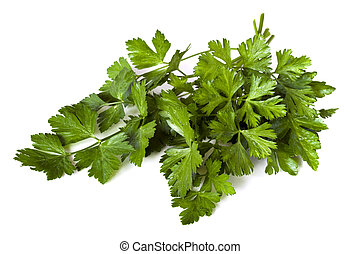 Parsley - Flat-leaf parsley, isolated on white background. ...