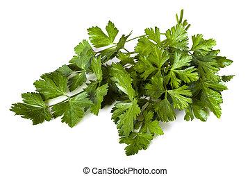 Parsley - Flat-leaf parsley, isolated on white background. ...