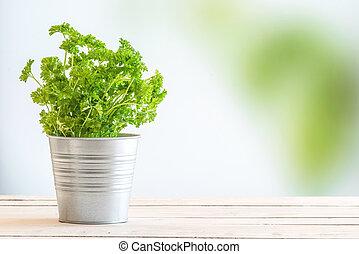 Parsley herbs in fresh green colors
