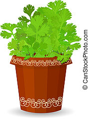 Parsley in a flower pot