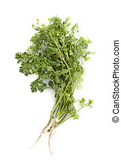 parsley isolated on white background., top view
