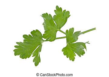 parsley on white background
