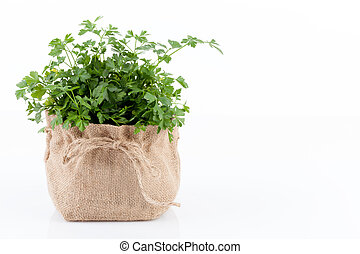 Parsley plant in a burlap sack, isolated on white...