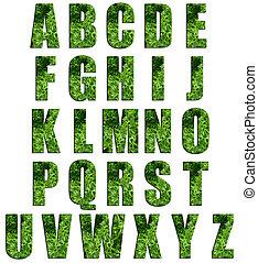 Parsley Texture Alphabet