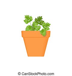 parsley vector culinary herb in terracotta pot. Green...