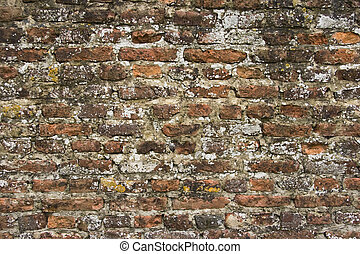 Part of 300 years old brick stone wall with lichens - Part...