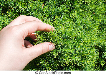 Part of a green tree in hand in view - Hand holding a part...