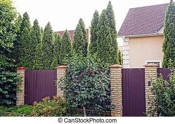 private long brown fence with a closed door of metal and brick outside in the green grass and long coniferous trees