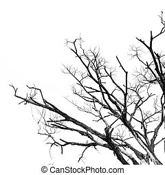 Part of dead tree isolated on white background